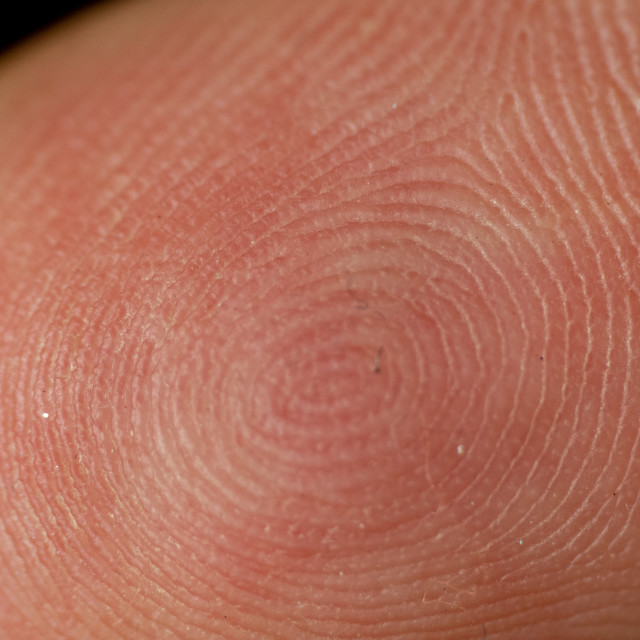 """Close up of a fingerprint"" stock image"