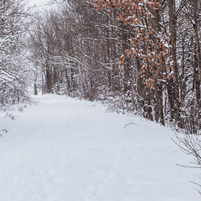 """""""Winter forest path in the snow. White winter."""" stock image"""
