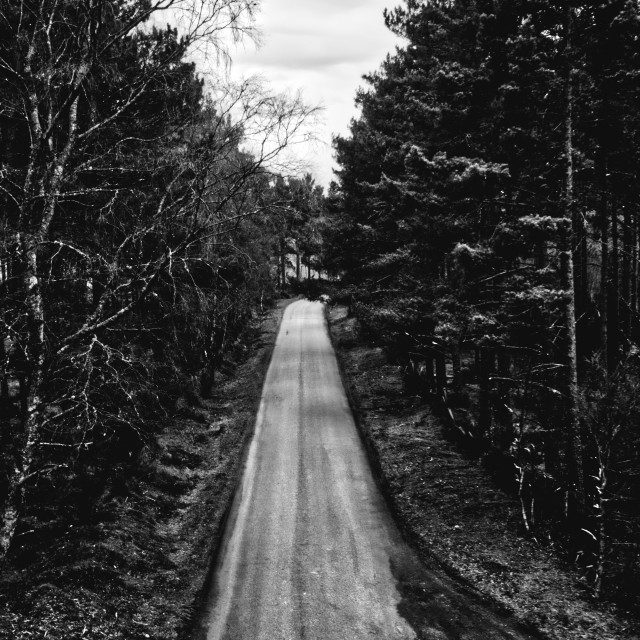 """""""The Road Less Travelled"""" stock image"""