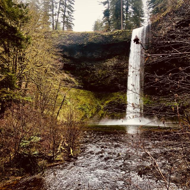"""""""Waterfall through the brush"""" stock image"""
