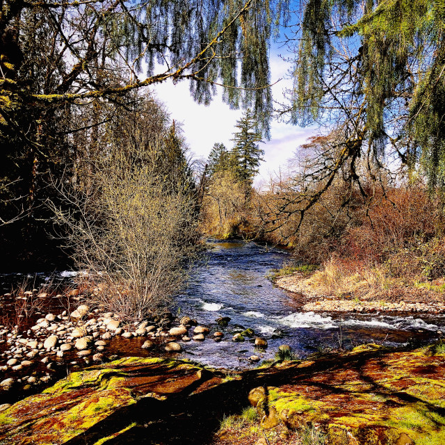 """""""River through the Trees"""" stock image"""