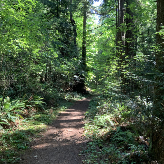 """""""Forest Trail #1"""" stock image"""
