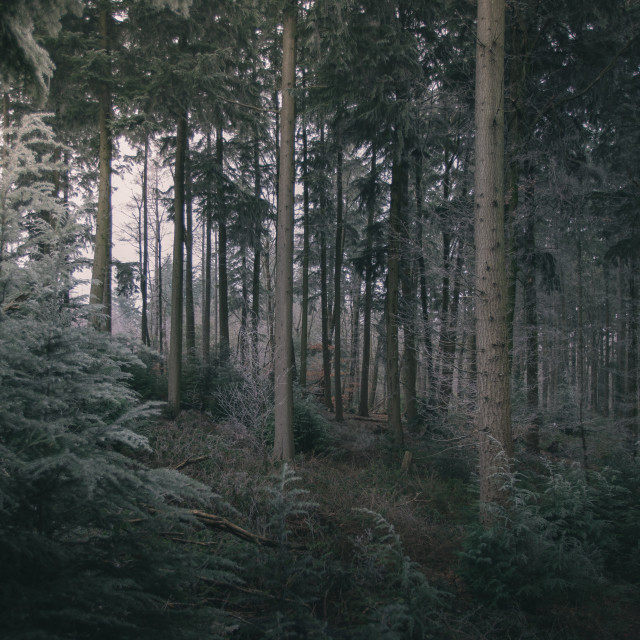 """Gloomy Woodland View"" stock image"