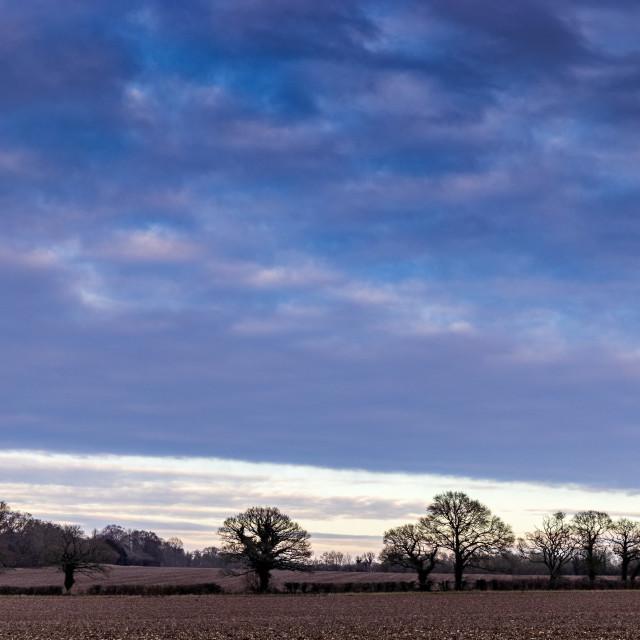 """Dusky sky over a Hampshire field"" stock image"