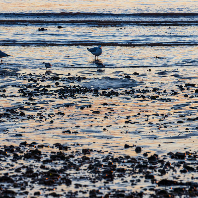 """""""Seagulls on a silver beach"""" stock image"""