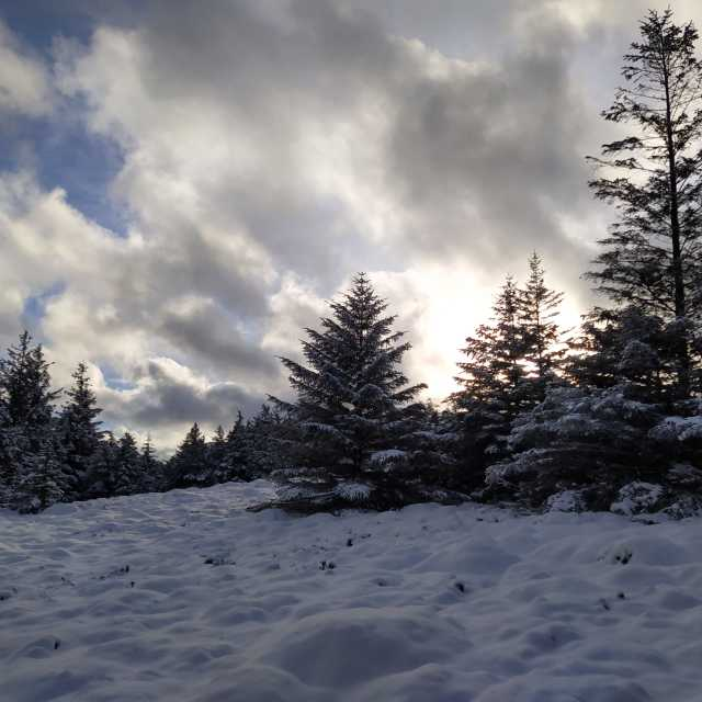 """""""Snow in Whinlatter Forest"""" stock image"""