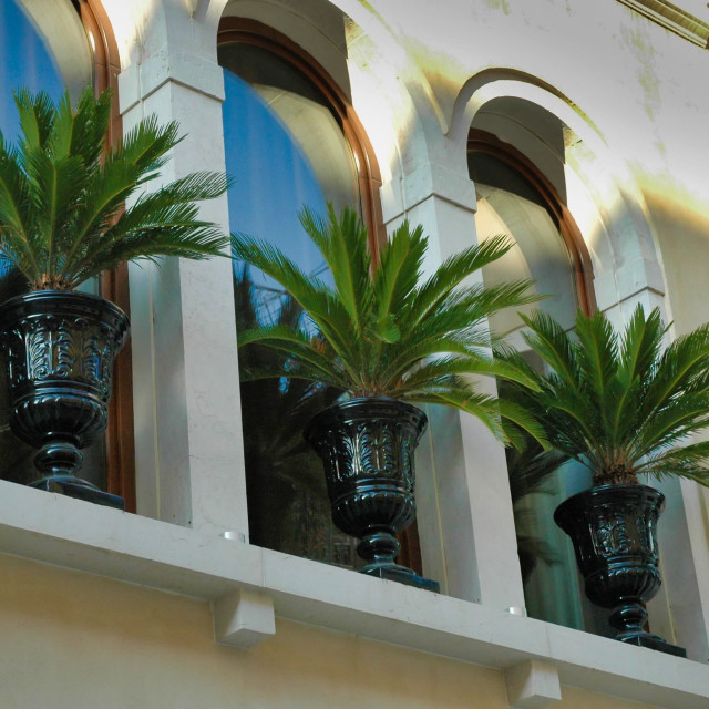 """Townhouse palms"" stock image"