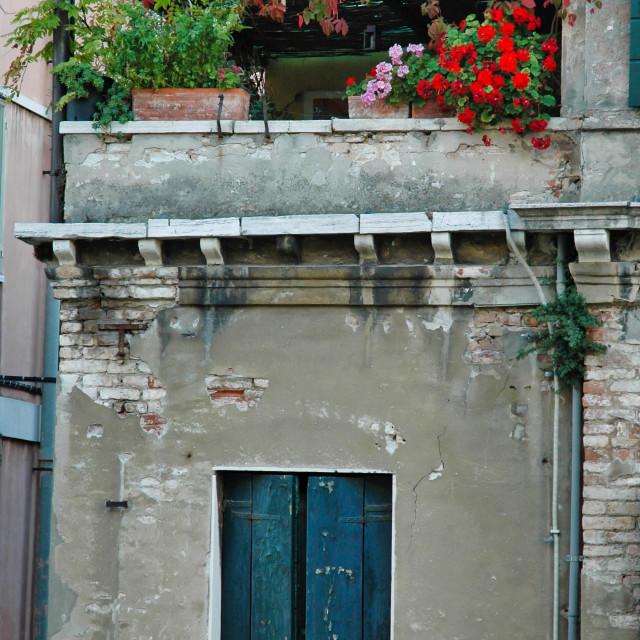 """Roof garden, Venice"" stock image"