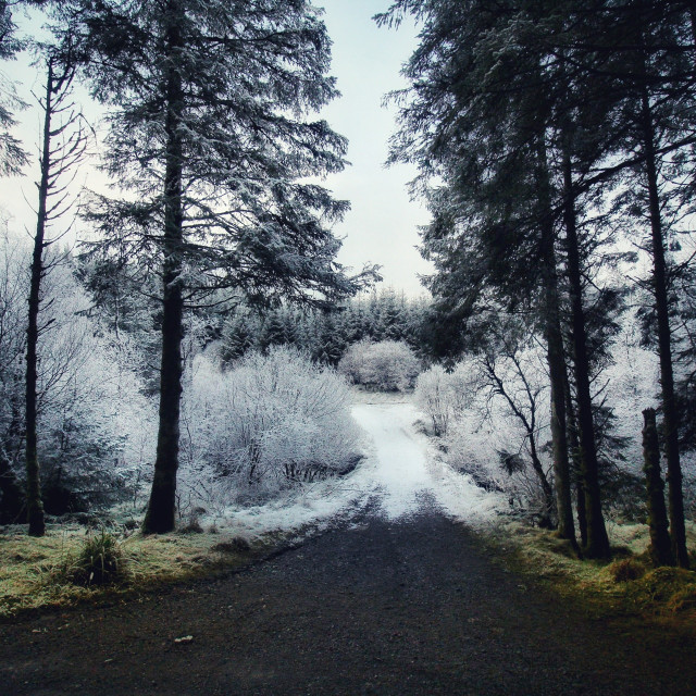 """Walking into winter"" stock image"