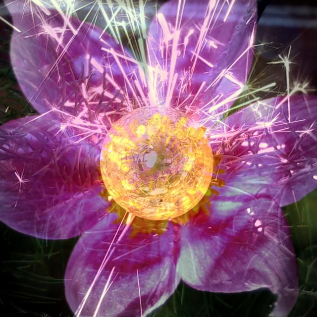 """Flower-sparkle"" stock image"