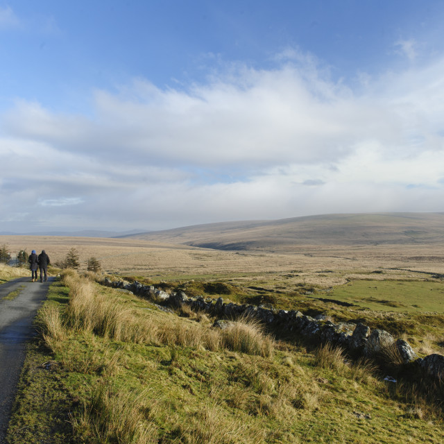 """""""Dartmoor: the lane to Whiteworks and Foxtor Mires"""" stock image"""
