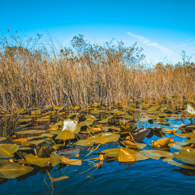 """Everglades National Park"" stock image"