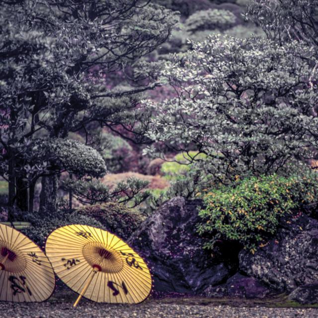 """Japanese parasols in Kyoto garden"" stock image"