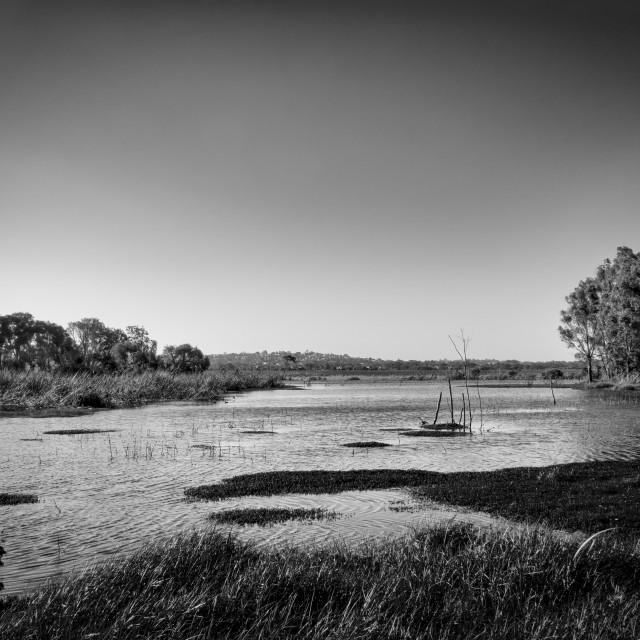 """Herdsman Lake Monochrome"" stock image"