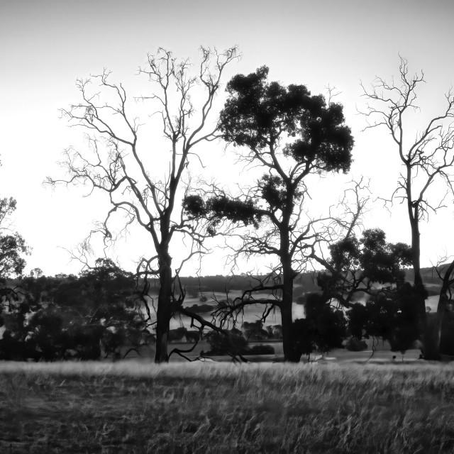 """Wheatbelt Farm Scene 4"" stock image"