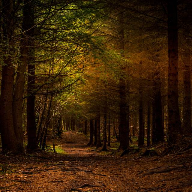 """""""Woodland Walks"""" stock image"""