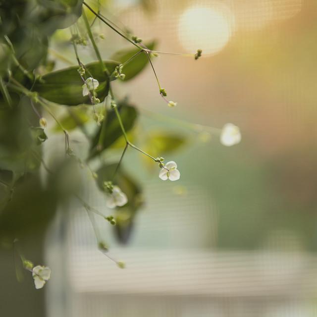 """Petals Saying Hello"" stock image"