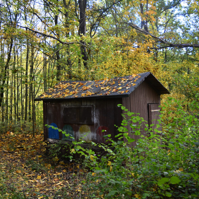 """Fall Cabin in the Woods"" stock image"