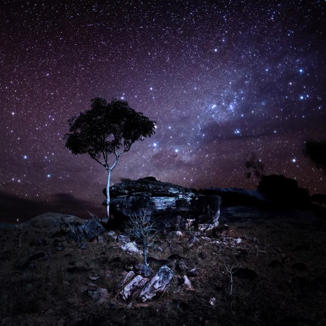 """Tree and stars"" stock image"