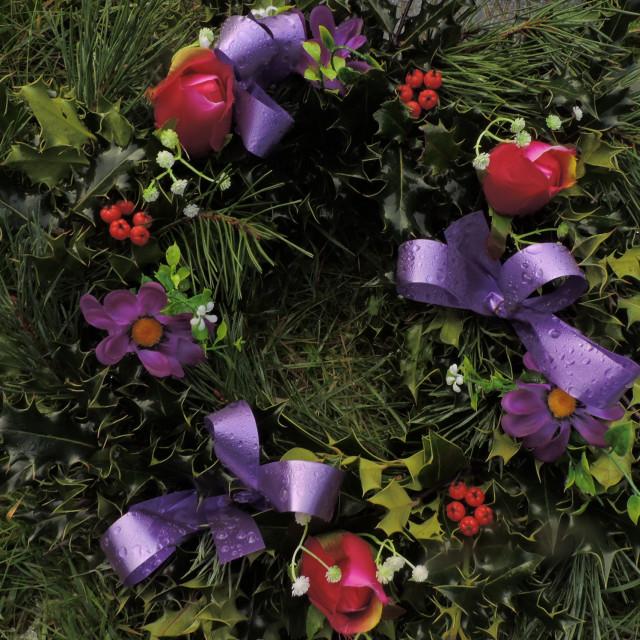 """Purple Holly Wreathe January 2021"" stock image"
