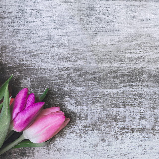 """""""panoramic view on a bouquet of tulips on a wooden background with copy space"""" stock image"""