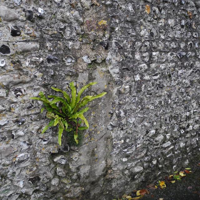 """English village wall"" stock image"
