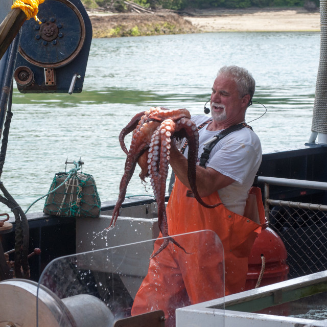 """""""Crab fisherman shows just-caught large octopus"""" stock image"""