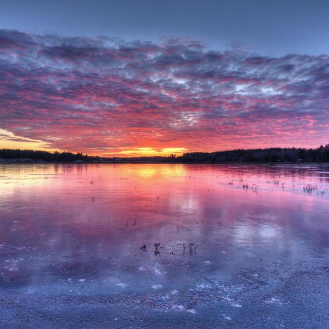 """Sunset on a cranberry bog"" stock image"