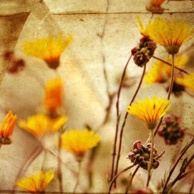 """""""Paper yellow rush."""" stock image"""