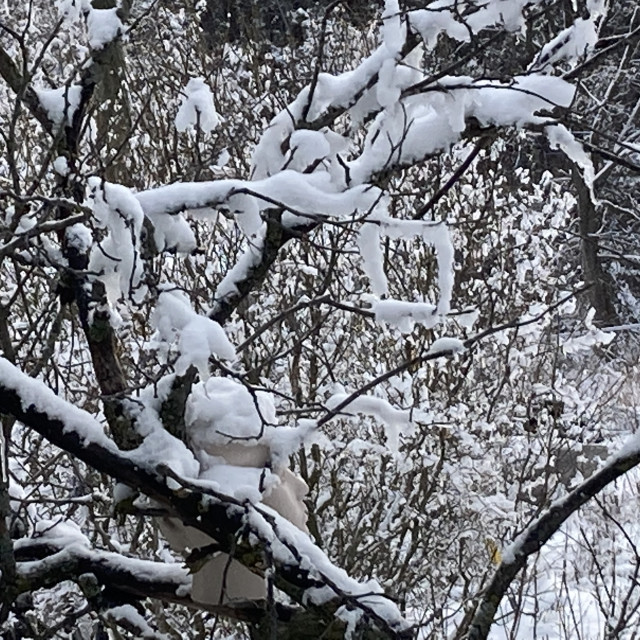 """Snow fall in northern Michigan"" stock image"