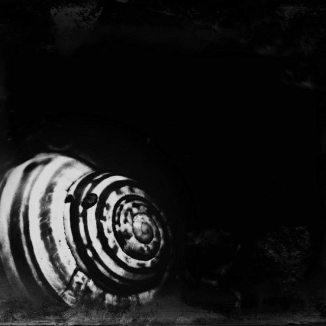 """Snail hibernation."" stock image"
