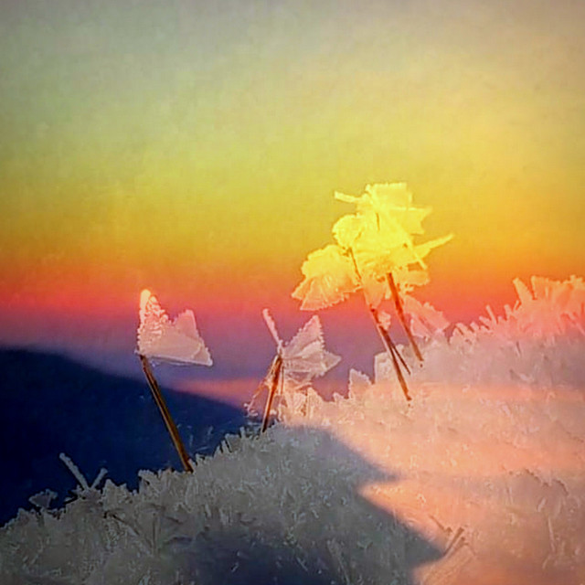 """""""'Ice-butterflies' at sunset"""" stock image"""