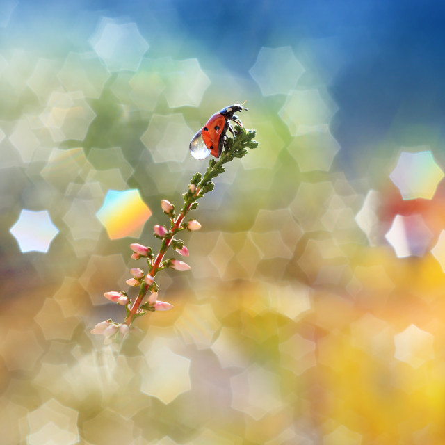 """""""Little red ladybug from my garden against the backdrop of the stars"""" stock image"""