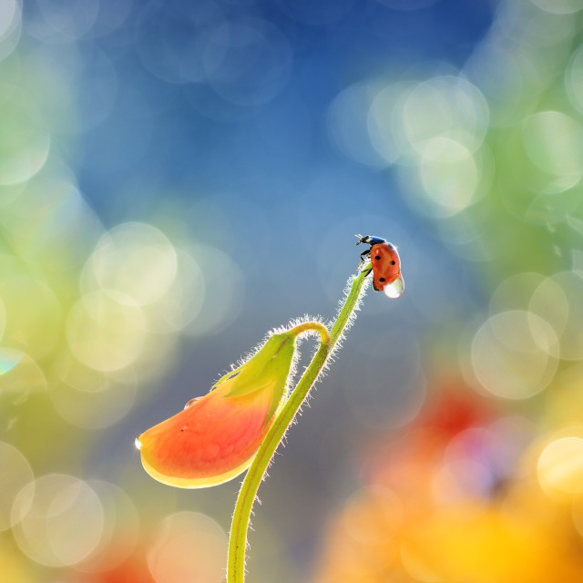 """""""A little red ladybug from my garden against an interesting background"""" stock image"""