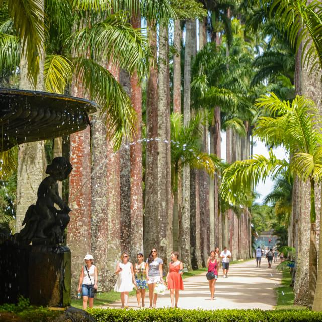 """""""Botanical Gardens (Jardim Botânico do Rio de Janeiro), Brazil"""" stock image"""