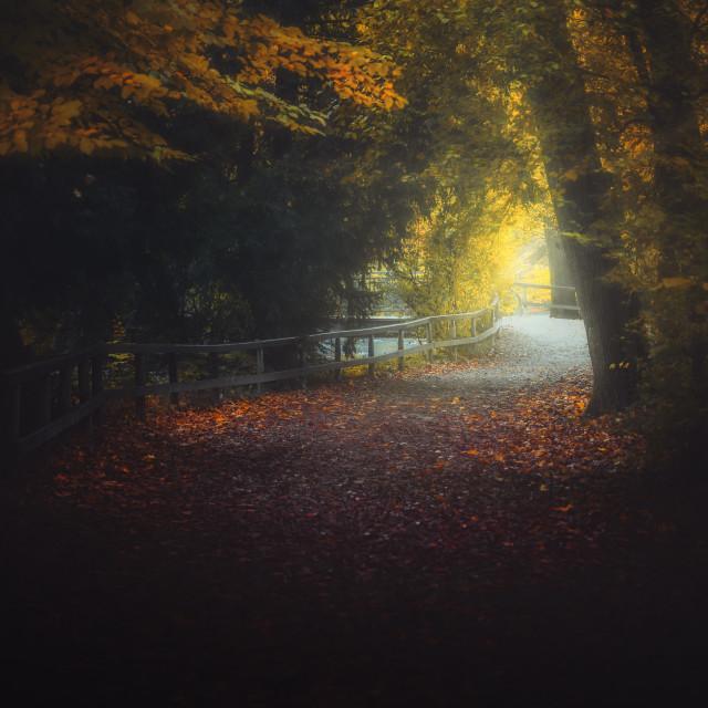 """Golden Fall"" stock image"