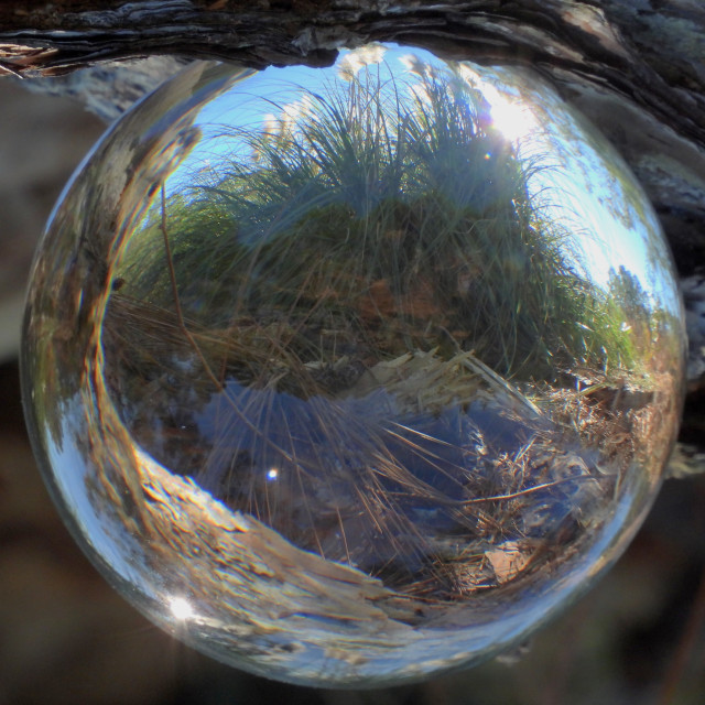 """""""Reversed Crystal Ball and Pompas Grass"""" stock image"""