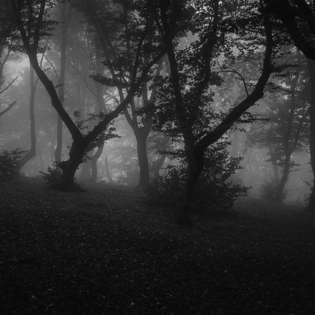 """""""Haunted forest"""" stock image"""