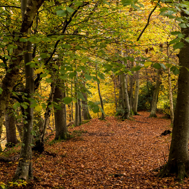 """""""Autumn Clearing"""" stock image"""
