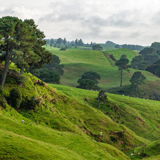 """Matamata, New Zealand"" stock image"