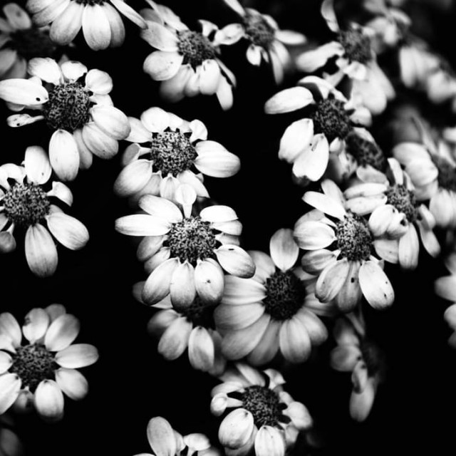"""Flower rush."" stock image"