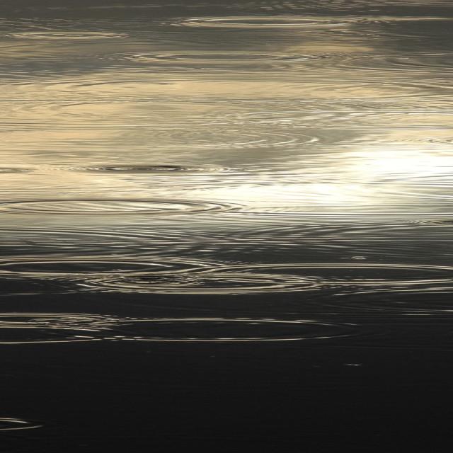 """Circular raindrop ripples on still water surface. Subtle muted c"" stock image"