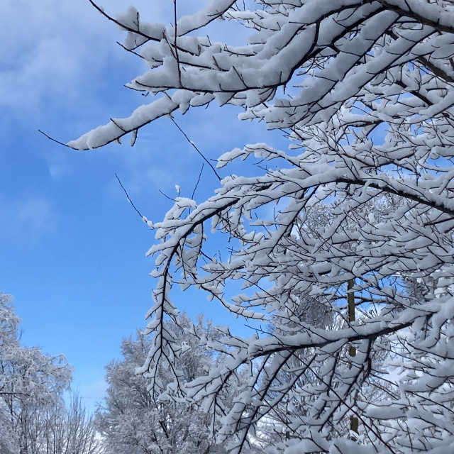 """Fresh snow"" stock image"