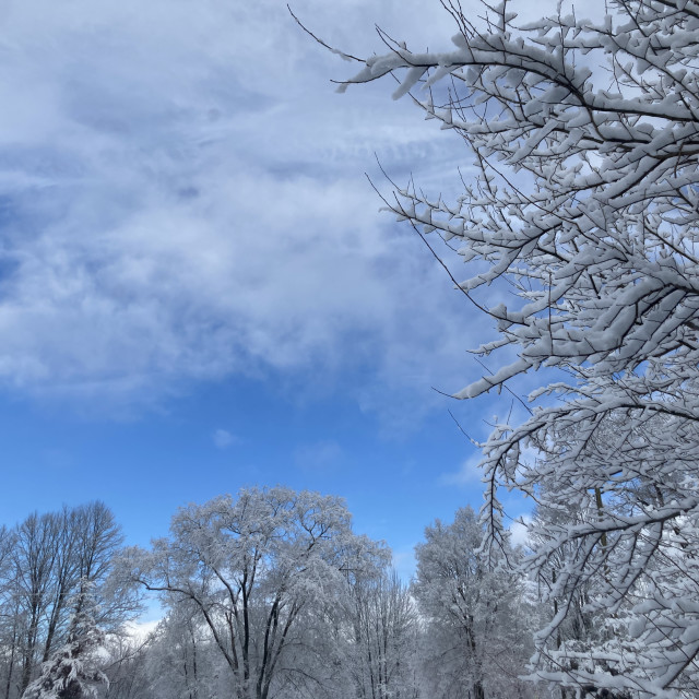 """""""Blue sky in the winter"""" stock image"""