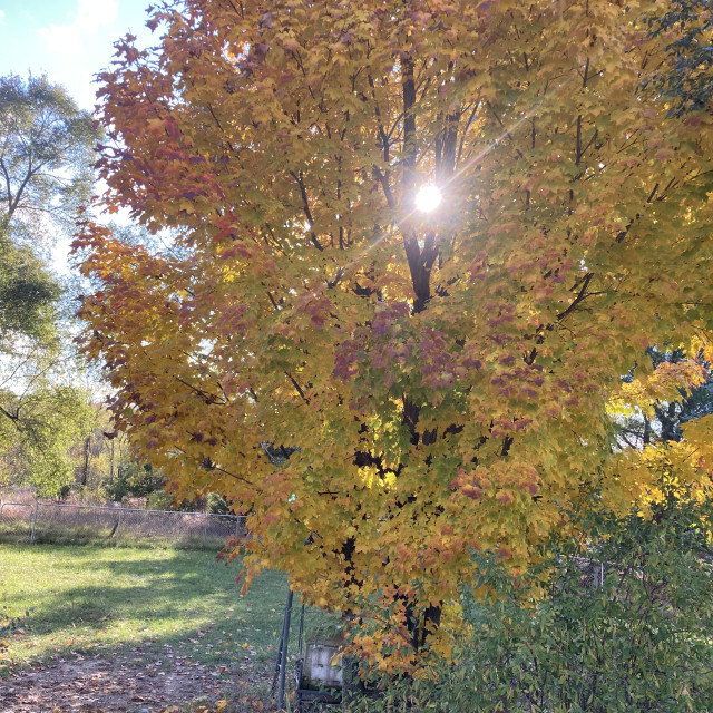 """Fall sun"" stock image"