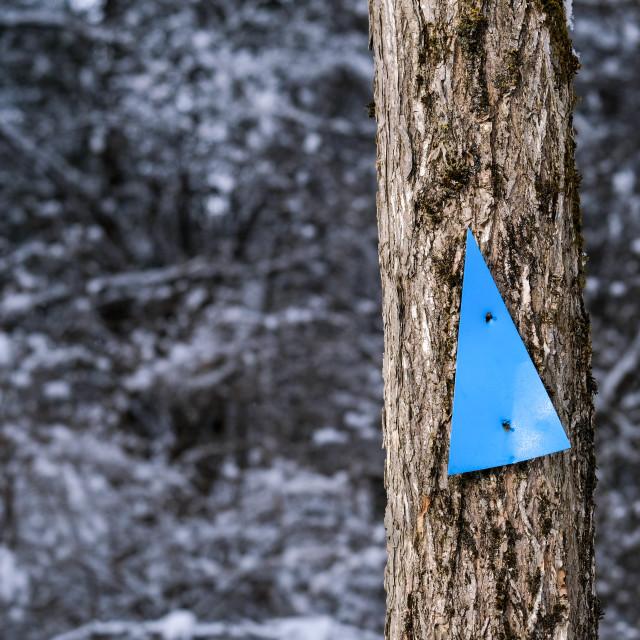 """Trail marker on slender tree in winter"" stock image"