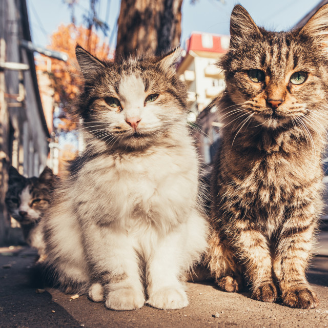 """""""Cats sitting on the street"""" stock image"""