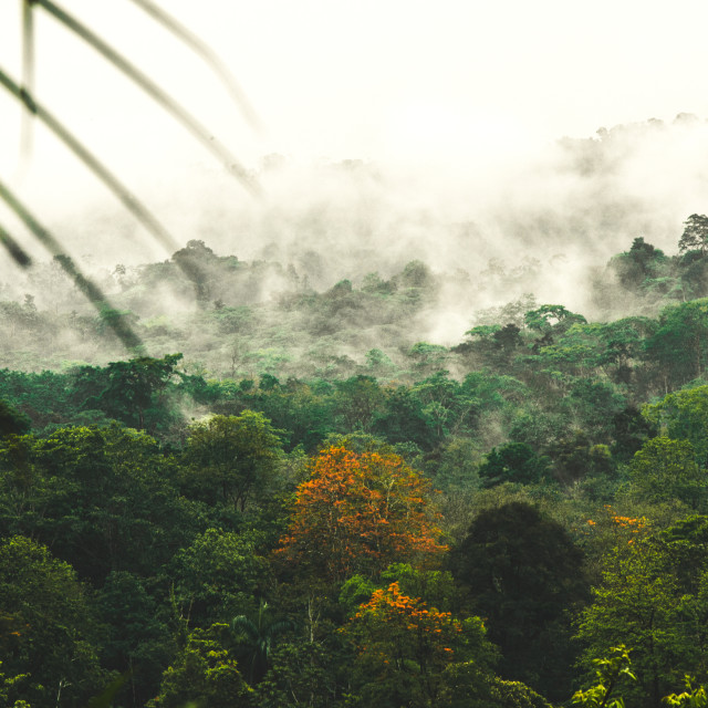 """""""Rainforest jungle landscape. Humidity makes water vaporing from the forest creating amazing misty morning scenery."""" stock image"""