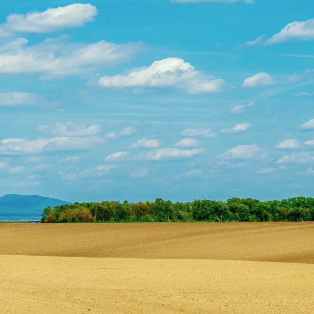 """""""Dune shaped field surrounded by blue sky and white clouds with forest island in the middle and mountain in the background"""" stock image"""