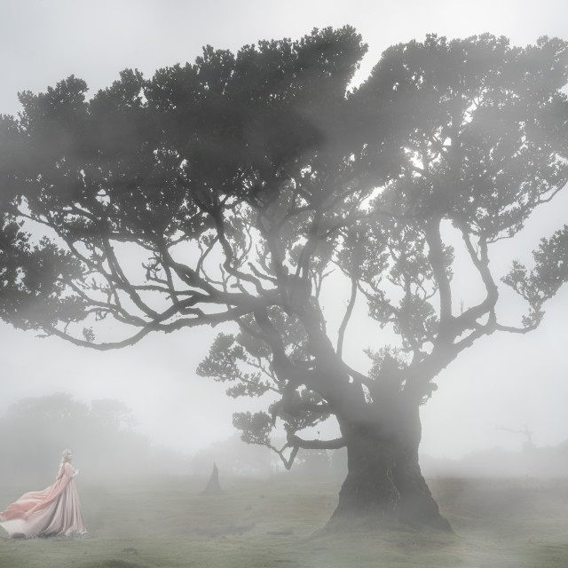 """""""The Remarkable Beauty of Fog"""" stock image"""